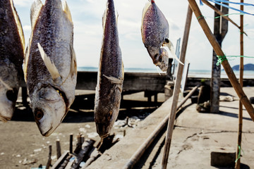 Dry fish of hanging at sunlight.