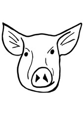 Muzzle pig close up on a white background. Sketch.