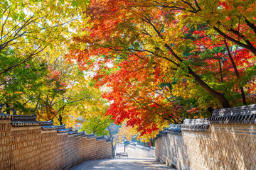 Traditional Korean Brick Wall and Black Ceramic Roof with colorful autumn leaves at entrance of Huwon (Secret Garden) at Changdeokgung Palace, Seoul, South Korea