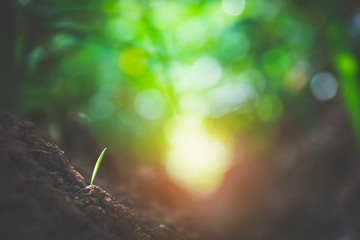 green grass leaf bokeh and soil vintage tone. background and abstract