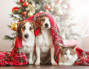 Cat and dog near christmas tree