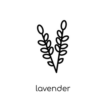 Lavender icon. Trendy modern flat linear vector Lavender icon on white background from thin line nature collection