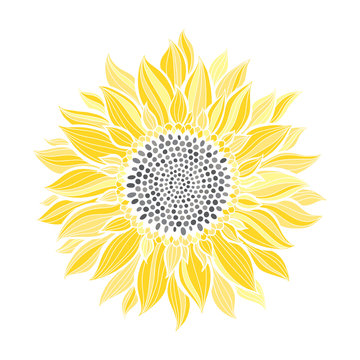 Sunflower.Sketch. Hand draw vector illustration, isolated floral element for design on white background.Silhouette.
