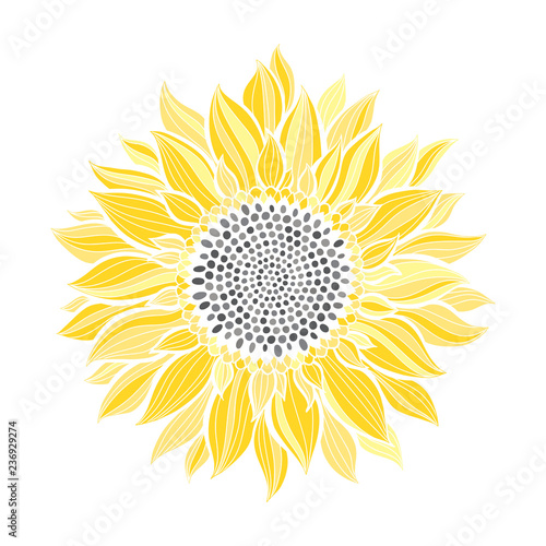 """Sunflower.Sketch. Hand draw vector illustration, isolated ..."