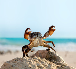 crab on wild nature