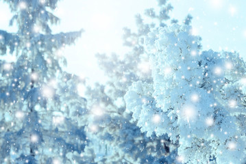 Christmas background with snowy fir trees. New year background.