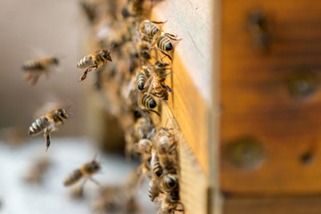 busy buzzzers