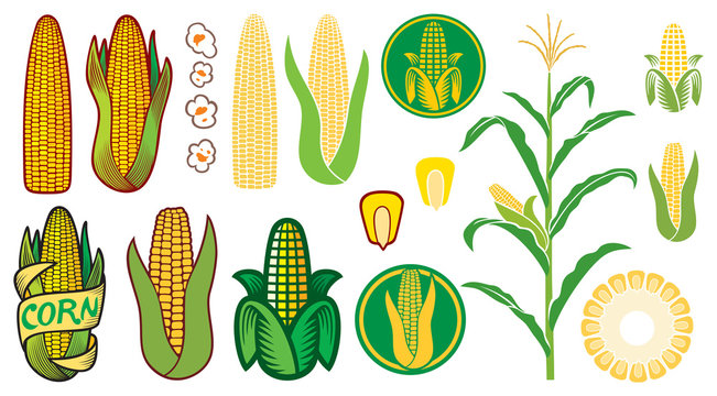 corn vector icons set (grain or seed, stalk, popcorn, corncob)