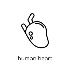Human Heart icon. Trendy modern flat linear vector Human Heart icon on white background from thin line Human Body Parts collection