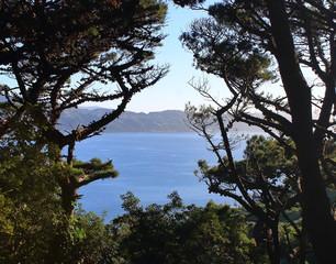 Beautiful View on Wellington Bay