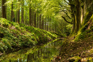 Beautiful green trees reflected in a small river that flows trough the forest.  Spring scenery in Russeltown Wood, County Wicklow, Ireland.