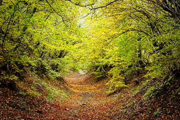 a leafy path going through a green forest