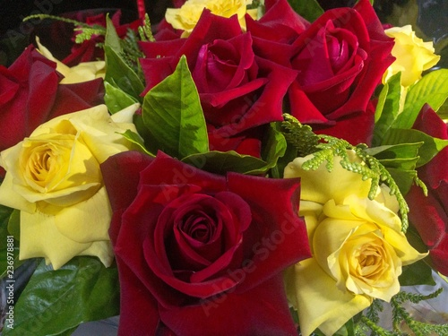 Rosas Vermelhas E Amarelas Stock Photo And Royalty Free Images On