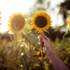 hand mit sonnenblume