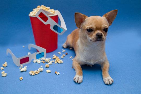 Попкорн рассыпался из коробки красного цвета. Рядом сидит маленькая собака и лежат стерео очки 3D для просмотра кинофильмов