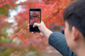 Autumn mood - Man is taking a photo on smartphone autumn maple leaves
