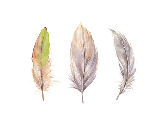 Hand drawn watercolor feather set.