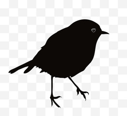 Black and white silhouette of a robin on a transparent background.