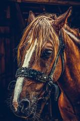 Beautiful brown horse portrait on a farm