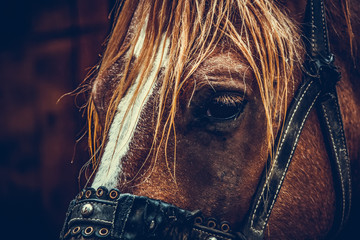 Beautiful brown horse portrait on a farm
