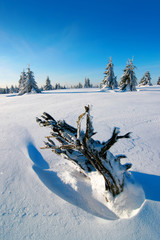 Wild untouched Winter Landscape covered by fresh snow, some Fir Trees, blue sky