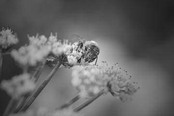 Bee sucking pollen