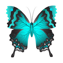 Fotobehang Vlinders in Grunge Vector illustration of a blue butterfly