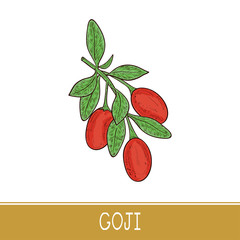 Goji. Branch, berry, leaf. Sketch. Color