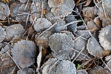 Frost auf Laub