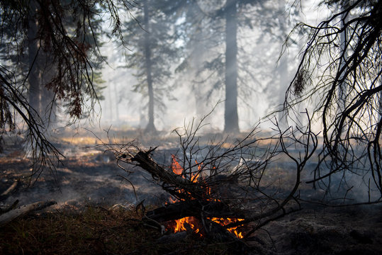 a controlled burn ignites a small pile of forest debris