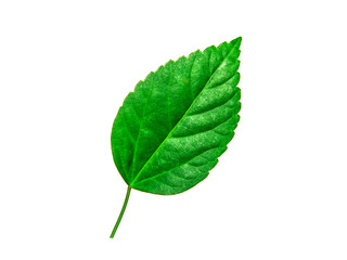 Green leaf tropical isolated on white background