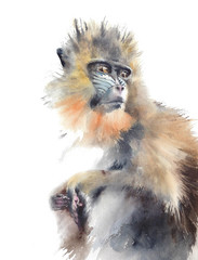 Monkey sitting colorful animal wildlife African original watercolor painting isolated on white background