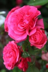 flower, orange, nature, yellow, garden, plant, summer, green, macro, red, blossom, calendula, flora, petals, bloom, flowers, petal, gazania, beautiful, closeup, bright, marigold, beauty, dahlia, sprin