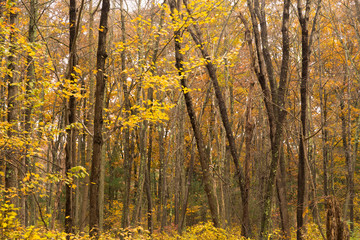 Dark Bark Thick Tree Trunk Fall Color Seasonal Leaves Forest