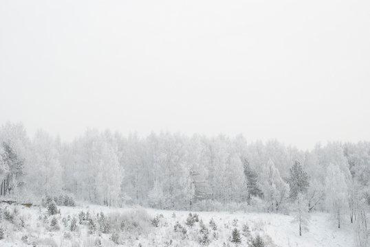 snowy evening winter forest