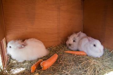 süße kuschlige Babykaninchen im Stall