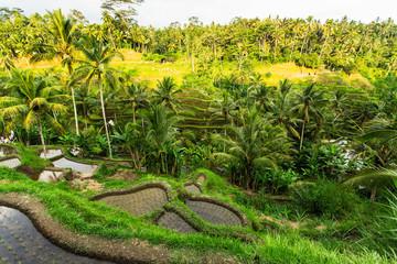 Green rice terraces in Bali island, Indonesia.