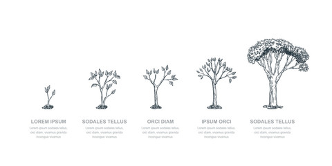 Stages of growing tree, vector sketch illustration. Investment and finance growth business concept. Infographic template