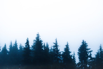 Snow and Pines in the Pacific Northwest