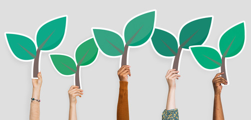 Hands holding plant leaves clipart Wall mural