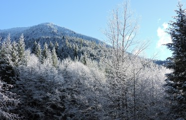 First Snow in West Central Cascades 2018 - 1
