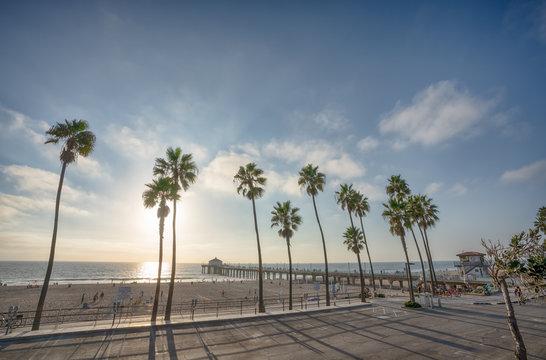 Manhattan Beach pier with aplm trees along the beach in California
