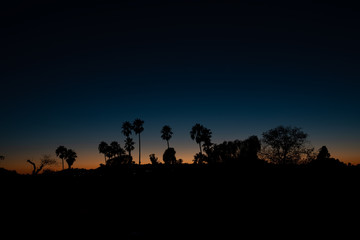 Palm trees silhouettes over an evening sky in Los Angeles, California