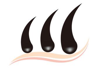 毛根の断面図C(ロゴ風)