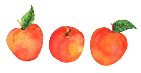 A watercolor drawing of three vibrant apples, isolated on a white background