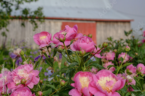 Countryside Flowers
