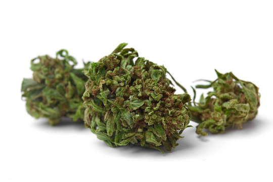 Close up macro photo of prescription and recreational medical marijuana hybrid strain flower indica dominant OG on white background