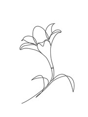 Hand drawn lily flowers. Black and white vector illustration