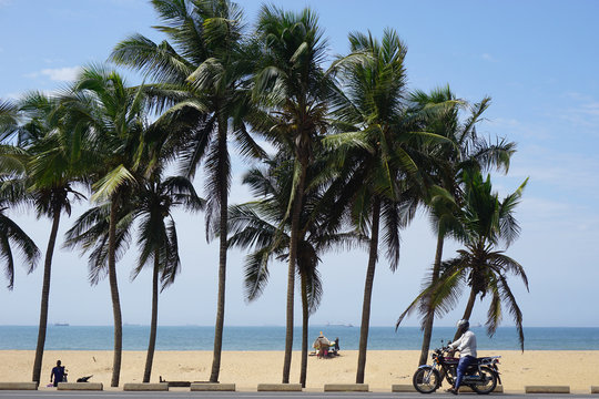 Palm trees at the seaside of Lome in Togo