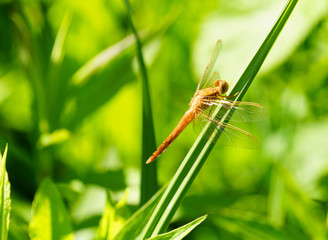 Portrait of a dragonfly on a green plant background